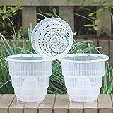 Meshpot - Orquídea transparente de plástico con agujeros, 3 unidades (2 unidades de 15 cm + 1 unidad de 12 cm)