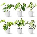 CROSOFMI Plantas Artificiales Interior 15 cm Mini Plastico Macetas Pequeñas Decorativas Plantas Falsas Habitacion Modernos Decoracion (6 Pack)